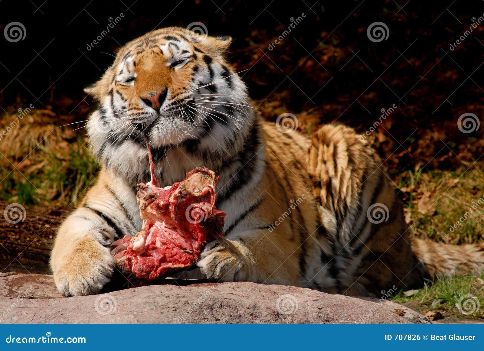 tiger food royalty free stock image image 707826. Black Bedroom Furniture Sets. Home Design Ideas