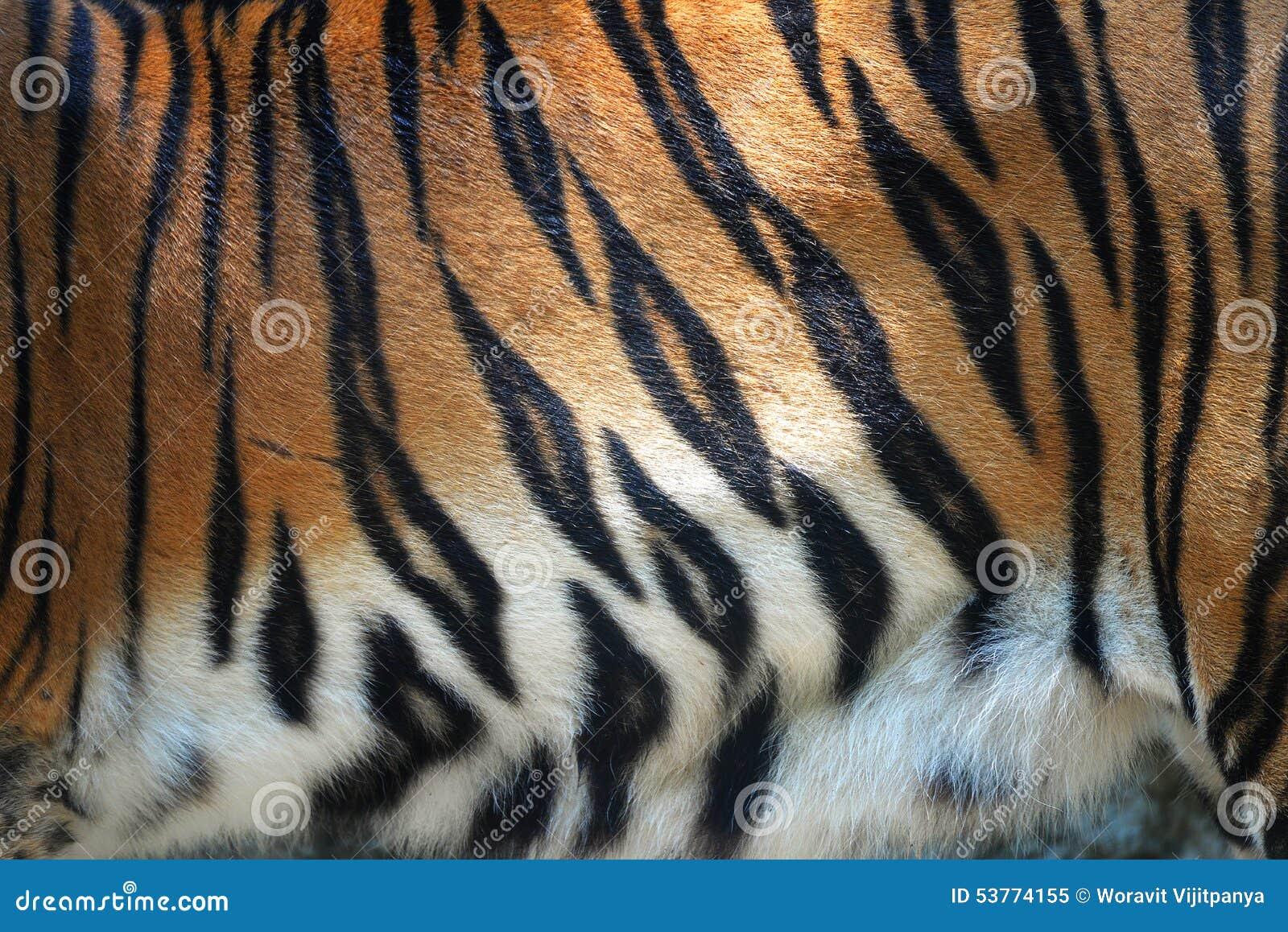 Tiger Fur Stripe Pattern Background