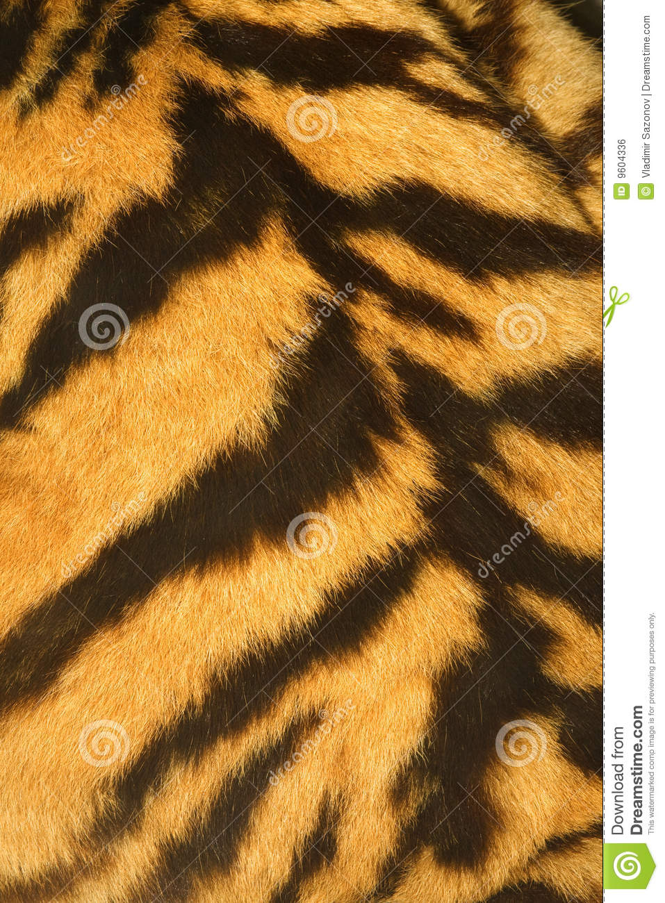 Tiger Fur Texture Real Stock Photo Image Of Furry