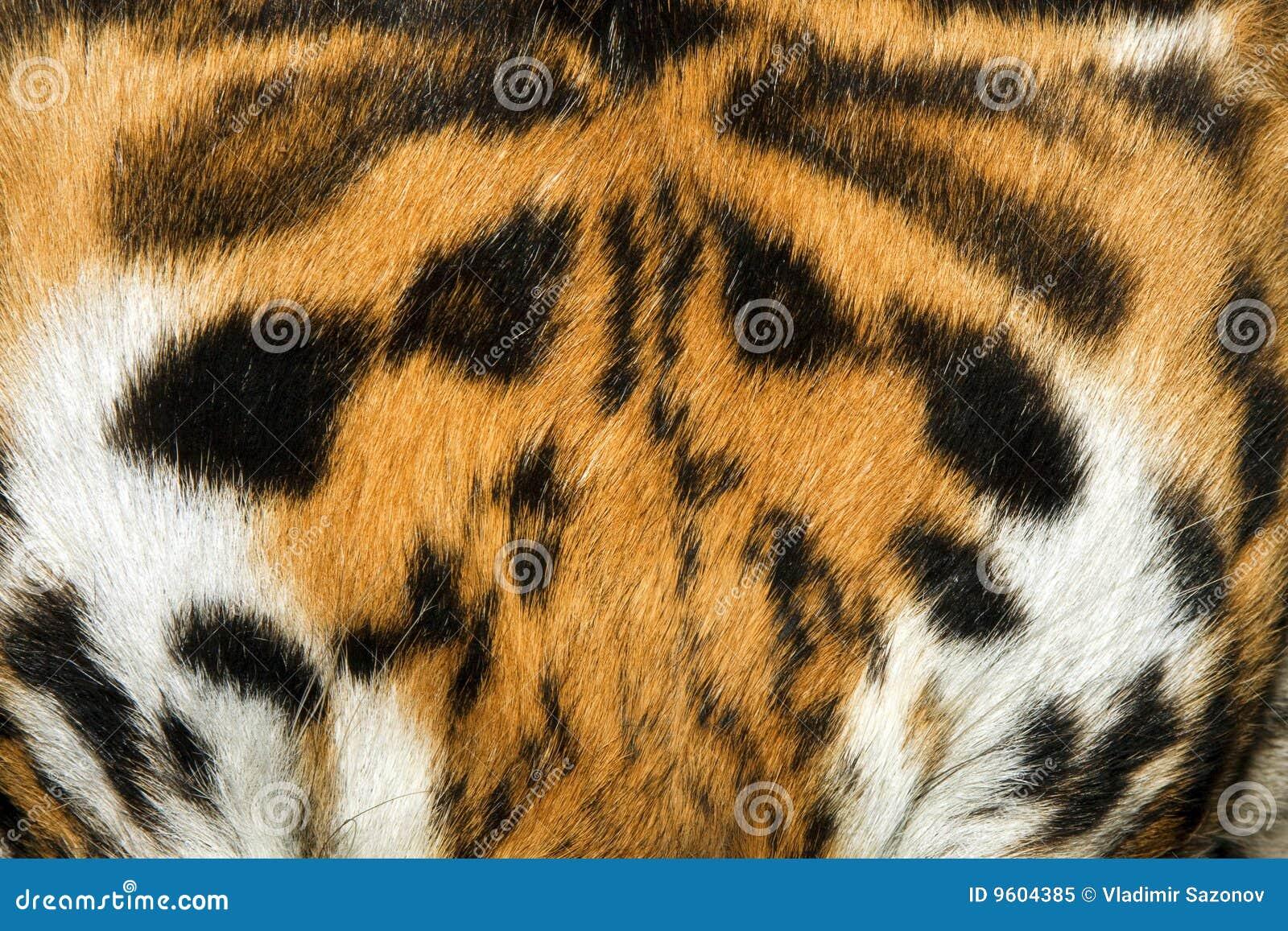 Tiger Fur Texture (real) Royalty Free Stock Photo - Image ...