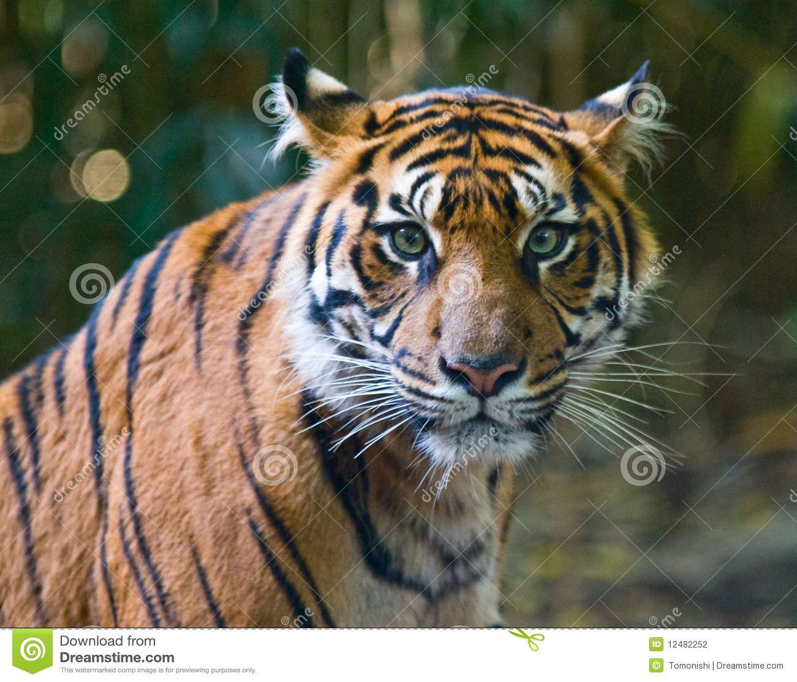 Green tiger eyes - photo#10