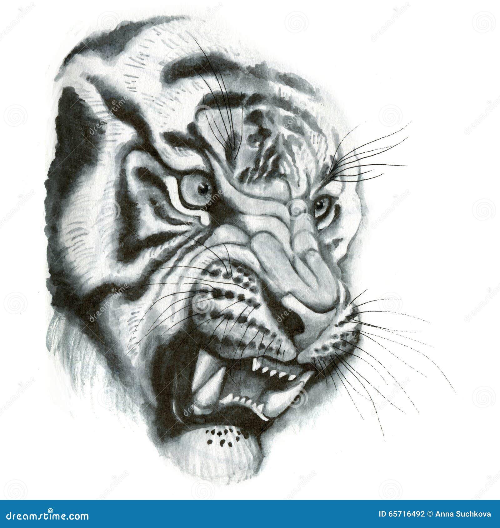 Tiger head portrait stock illustration. Image of india ...