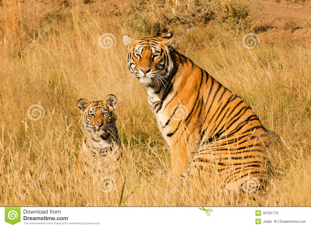 Tiger with her cub