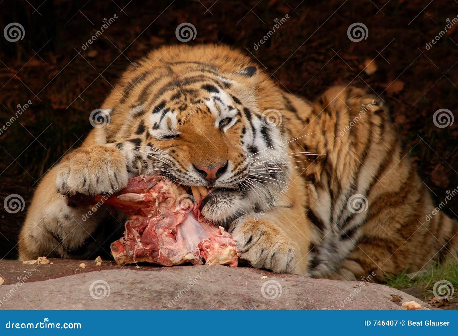 Tiger-Imbiß
