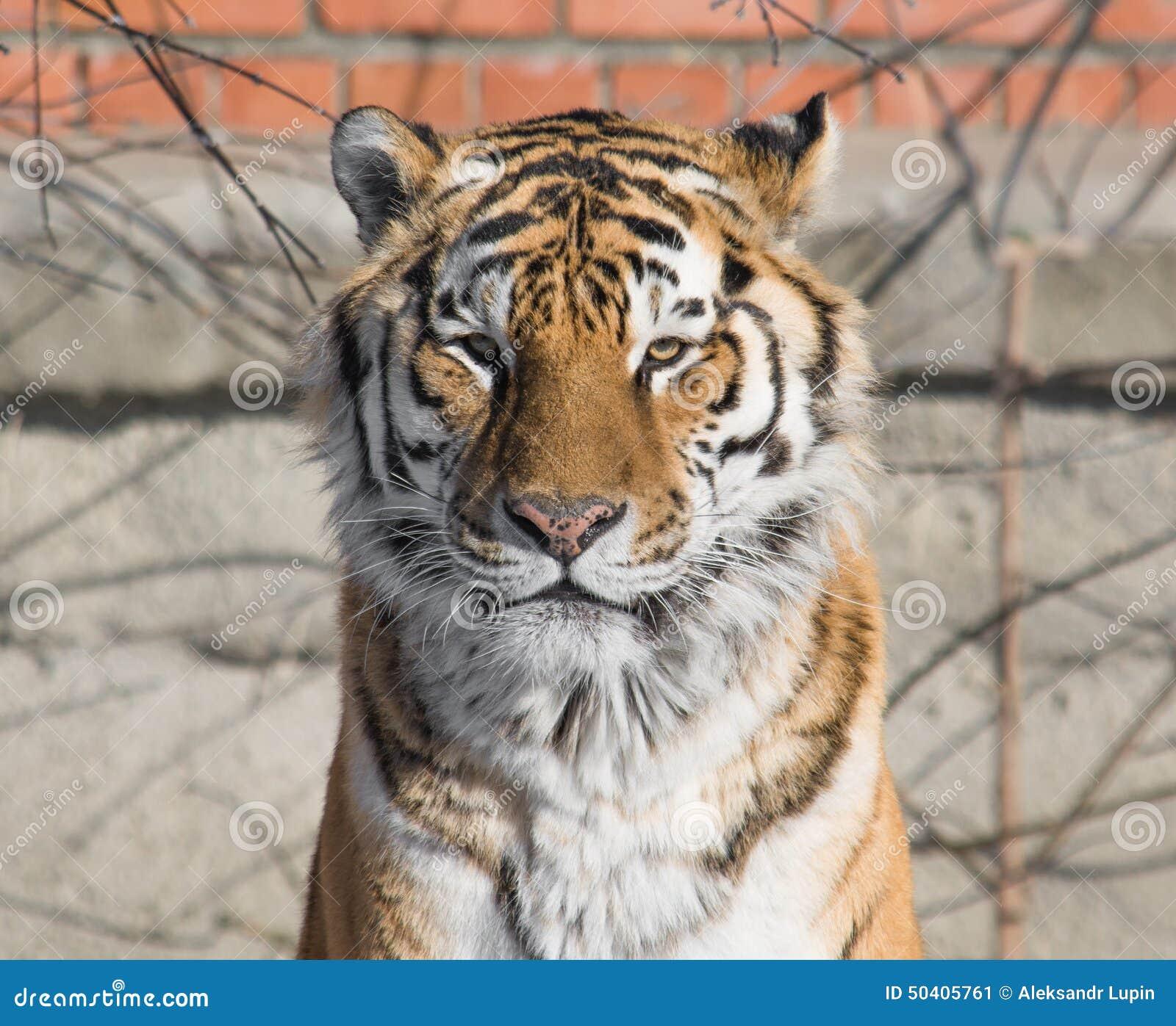Tiger Look Stock Photo