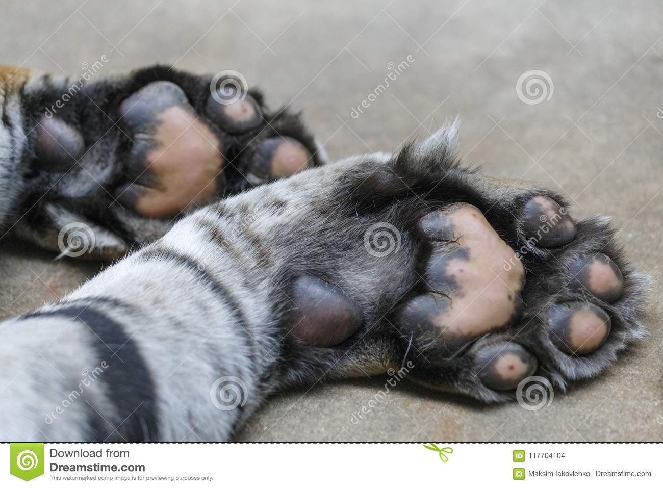 Tiger Paws