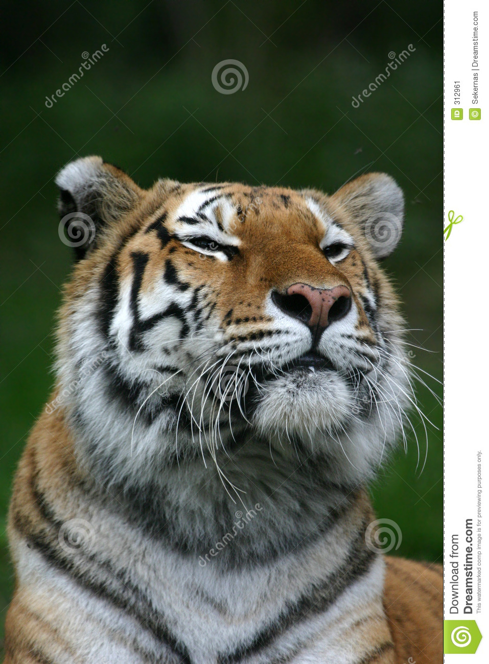 Tired Tiger | Tigers | Beautiful cats, Siberian tiger y ... |Bengal Tiger Tired