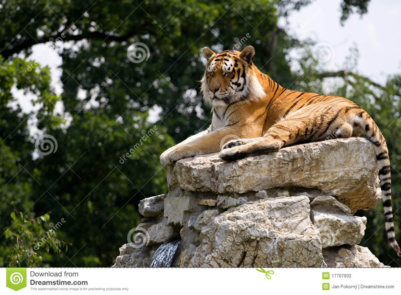 Tiger On The Rock Stock Photography Image 17707932