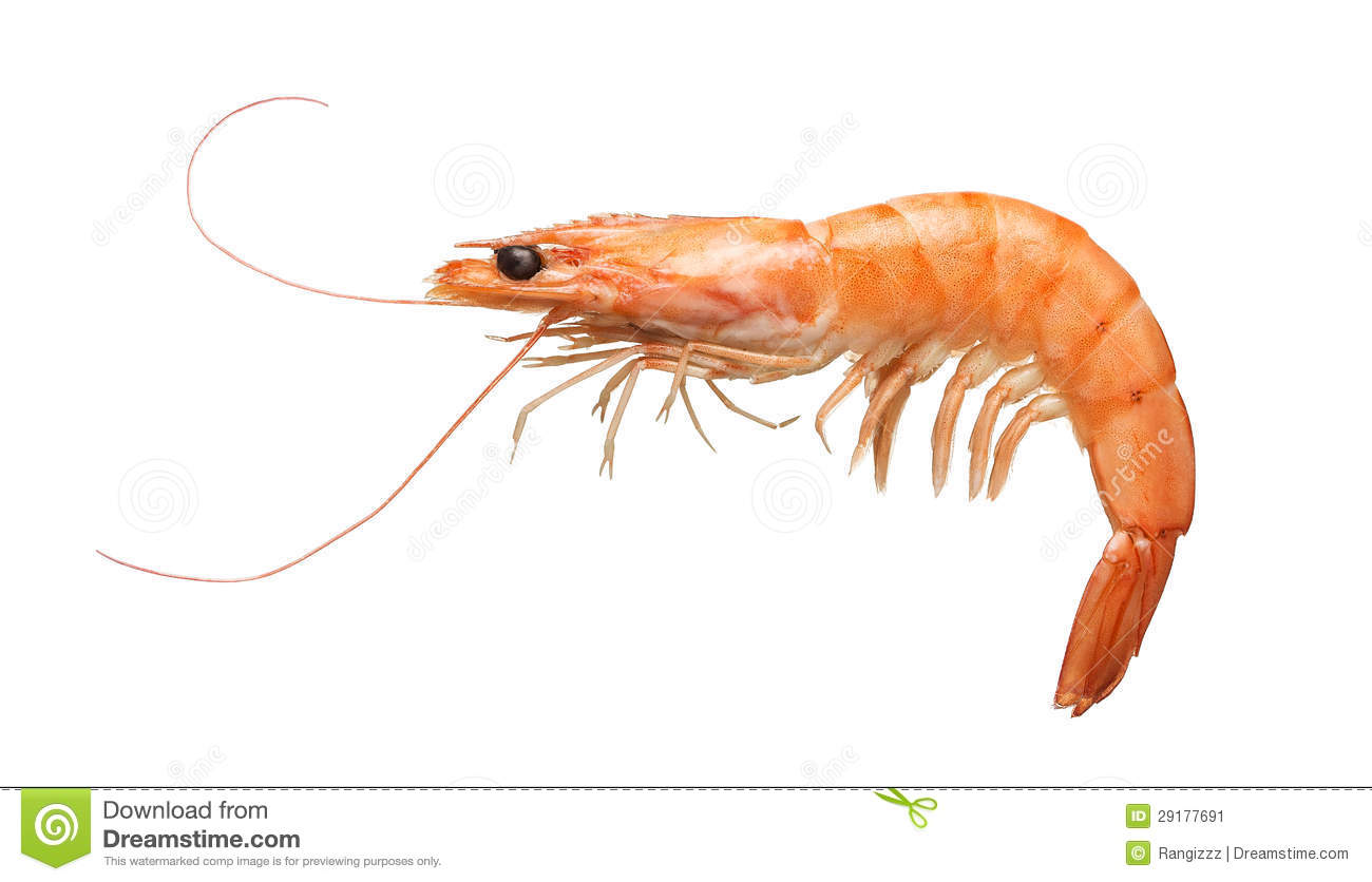 Tiger shrimp isolated on white