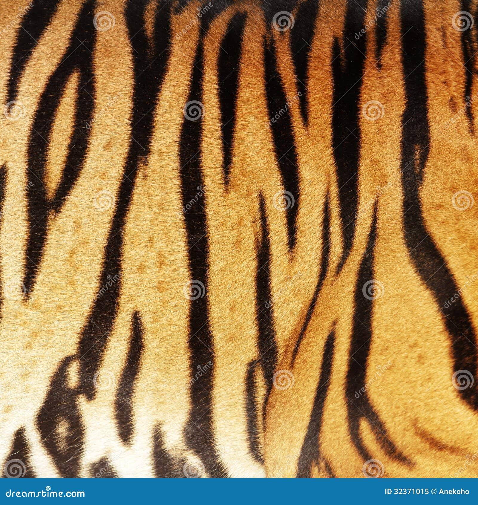 Tiger skin stock image. Image of background, black ... - photo#20