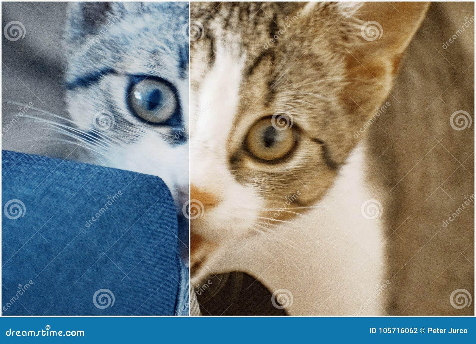 Download Tiger 2 stock photo. Image of kitten, carpet, tiger - 105716062