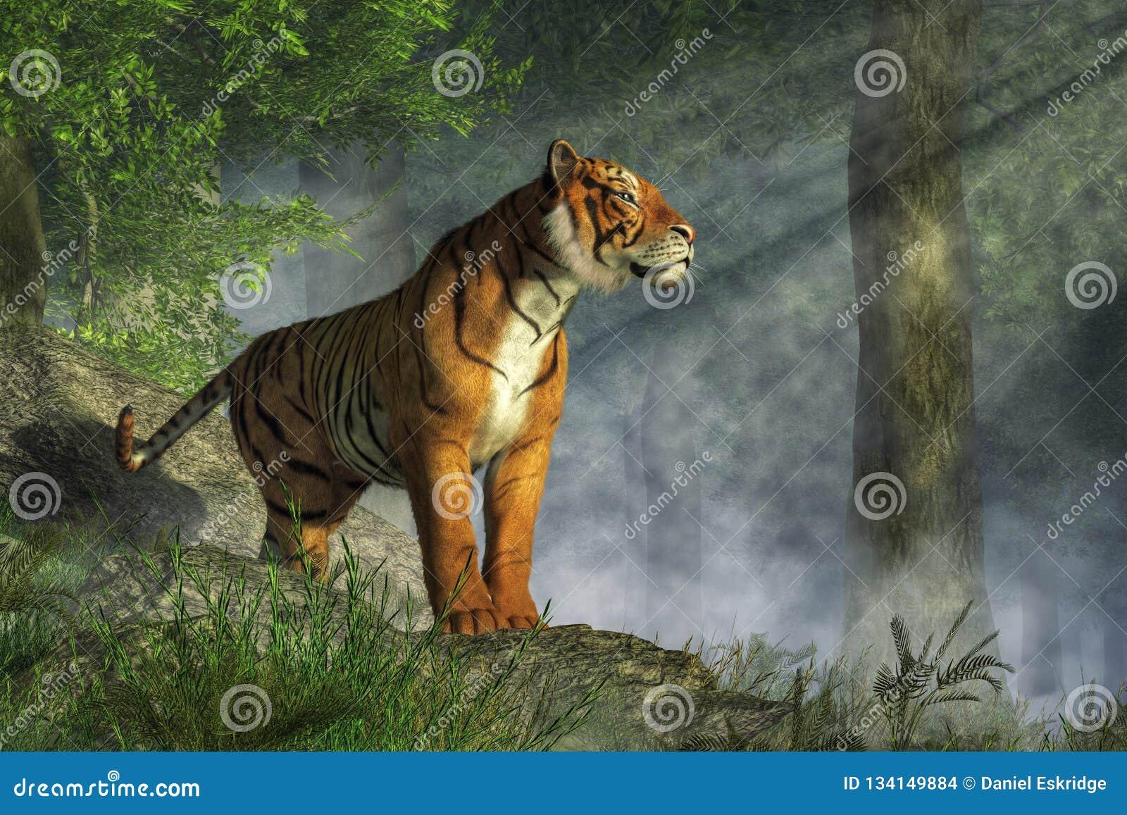 Tiger in the Light stock illustration  Illustration of