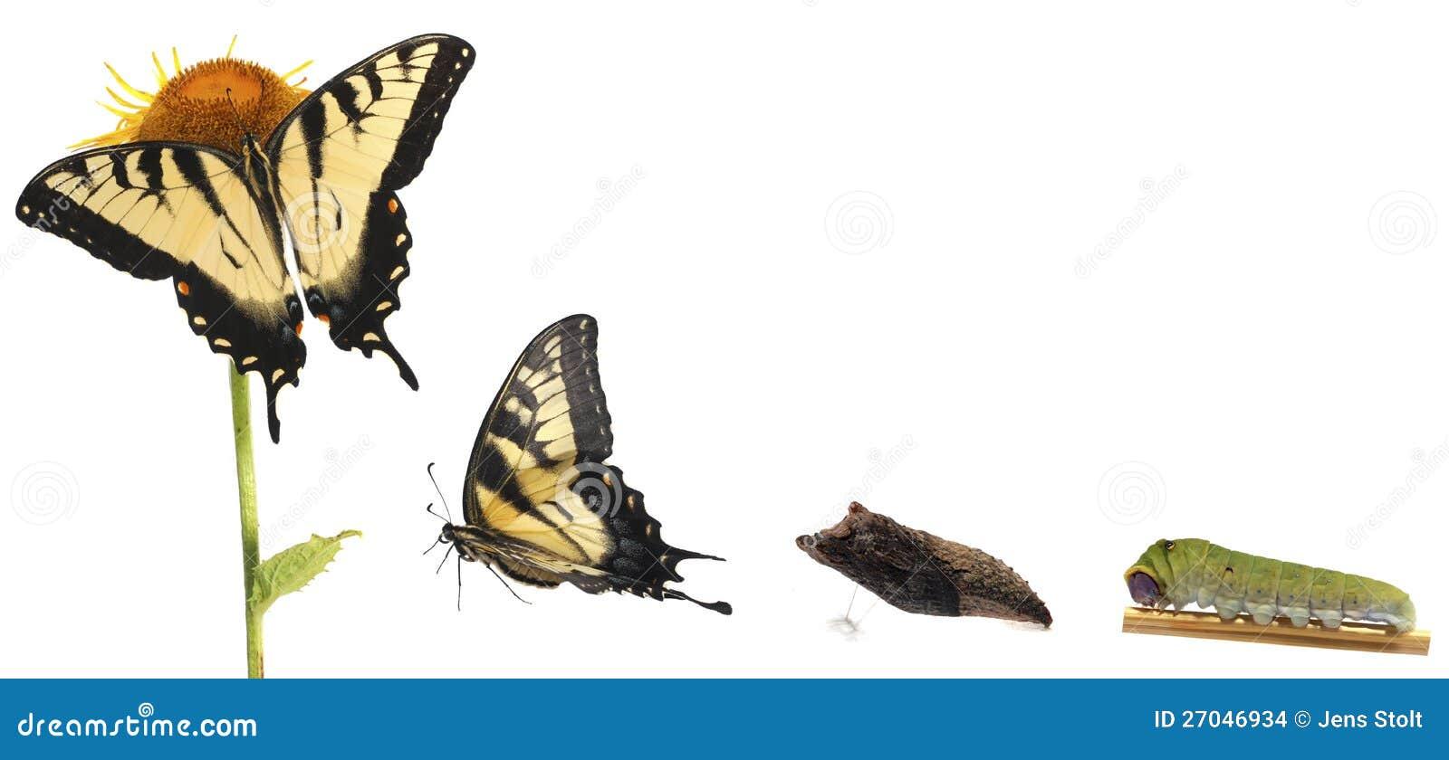 Caterpillar Stock Quote