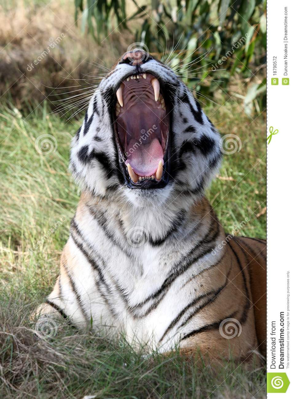 Tiger Teeth on Mouth Clip Art