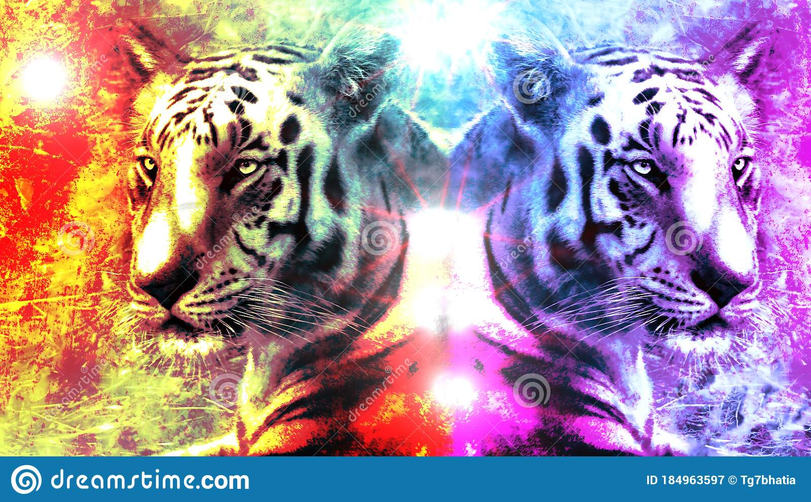 232 Tiger Graffiti Photos Free Royalty Free Stock Photos From Dreamstime