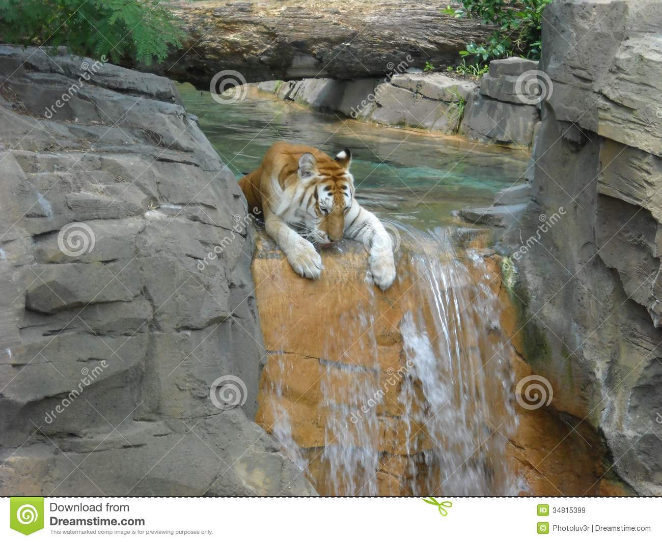 tiger on waterfall royalty free stock images - image: 34815399