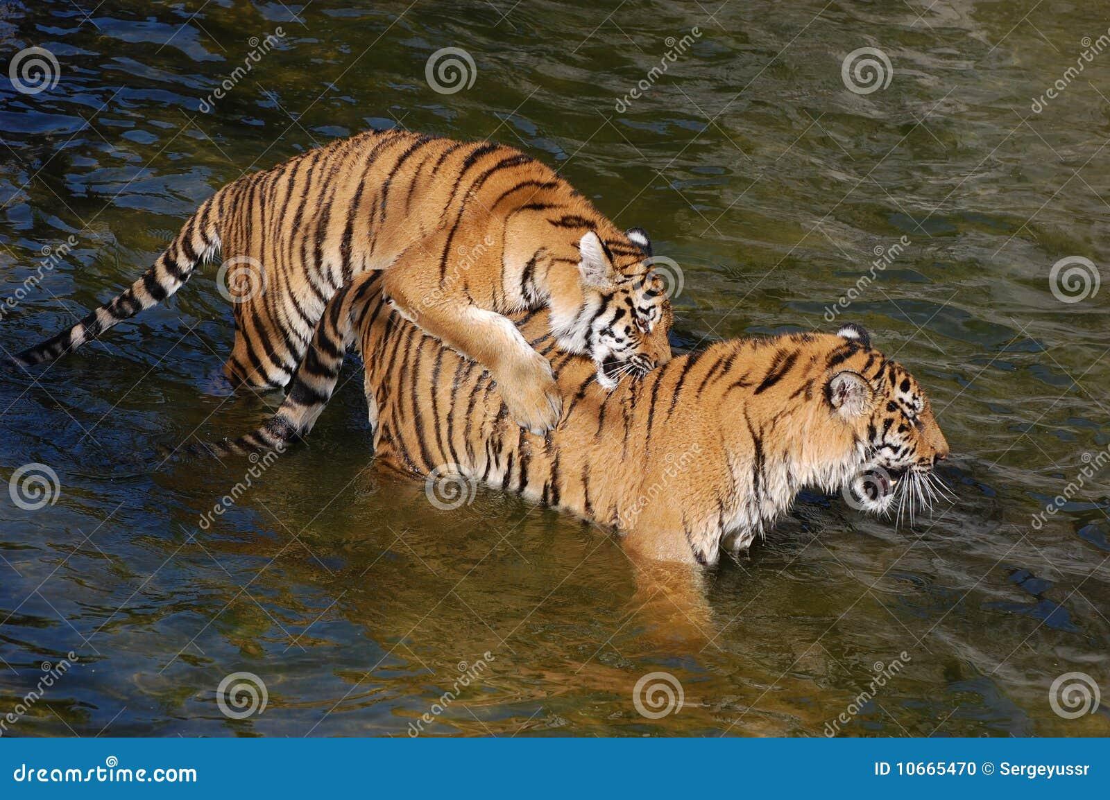Tigers киев модели веб камера i