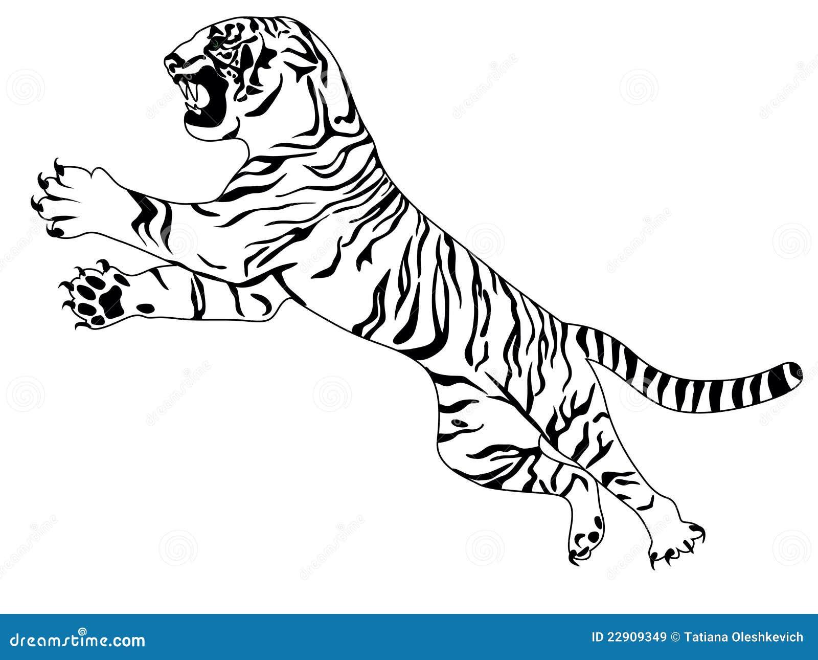 Tigre illustration de vecteur image du bengal stare - Image dessin tigre ...