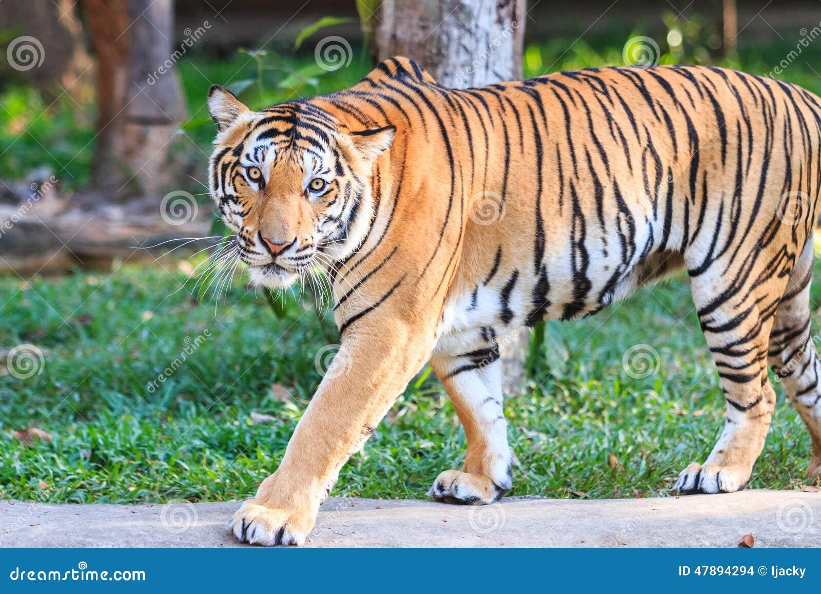 Comptitivit: les tigres asiatiques concurrencent leurs