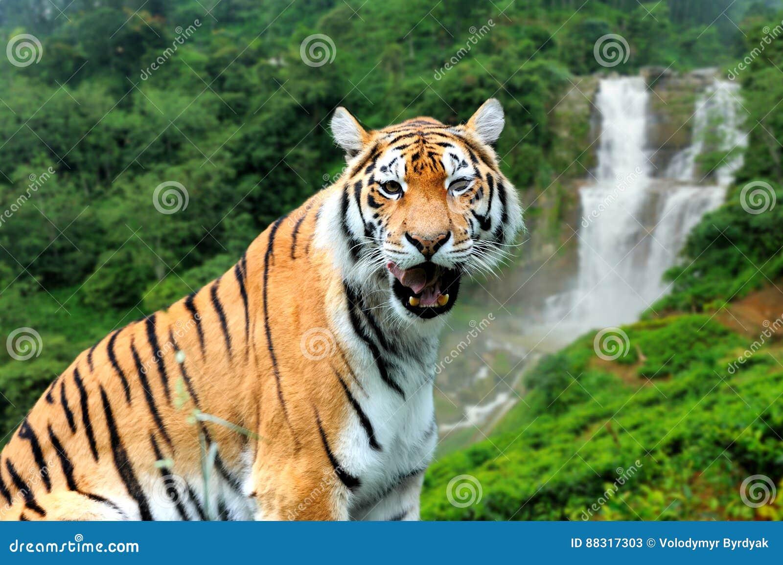 Vistoso Tigre Rayado Uñas Colección - Ideas Para Esmaltes - aroson.com