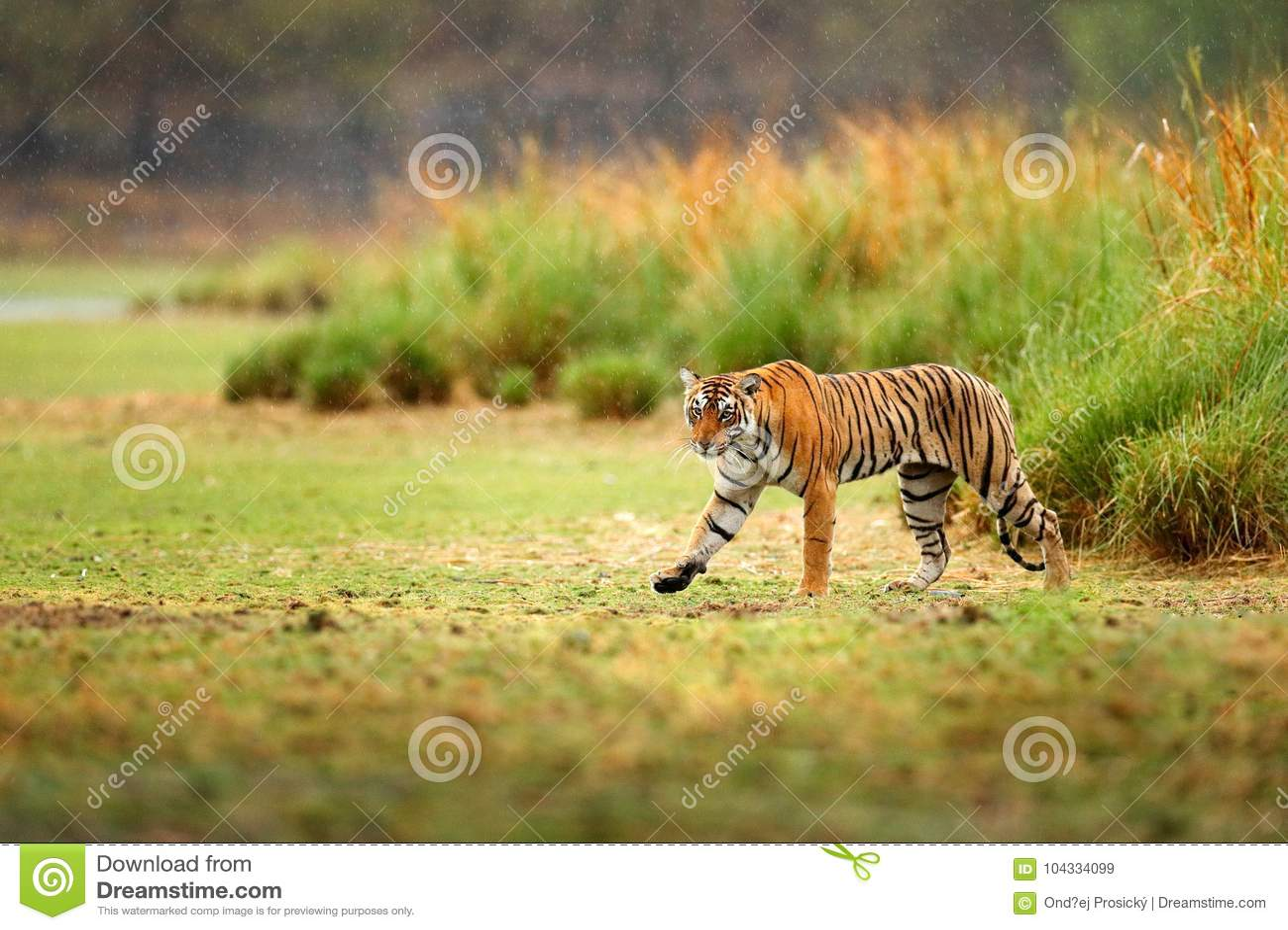www grande indiano micio com