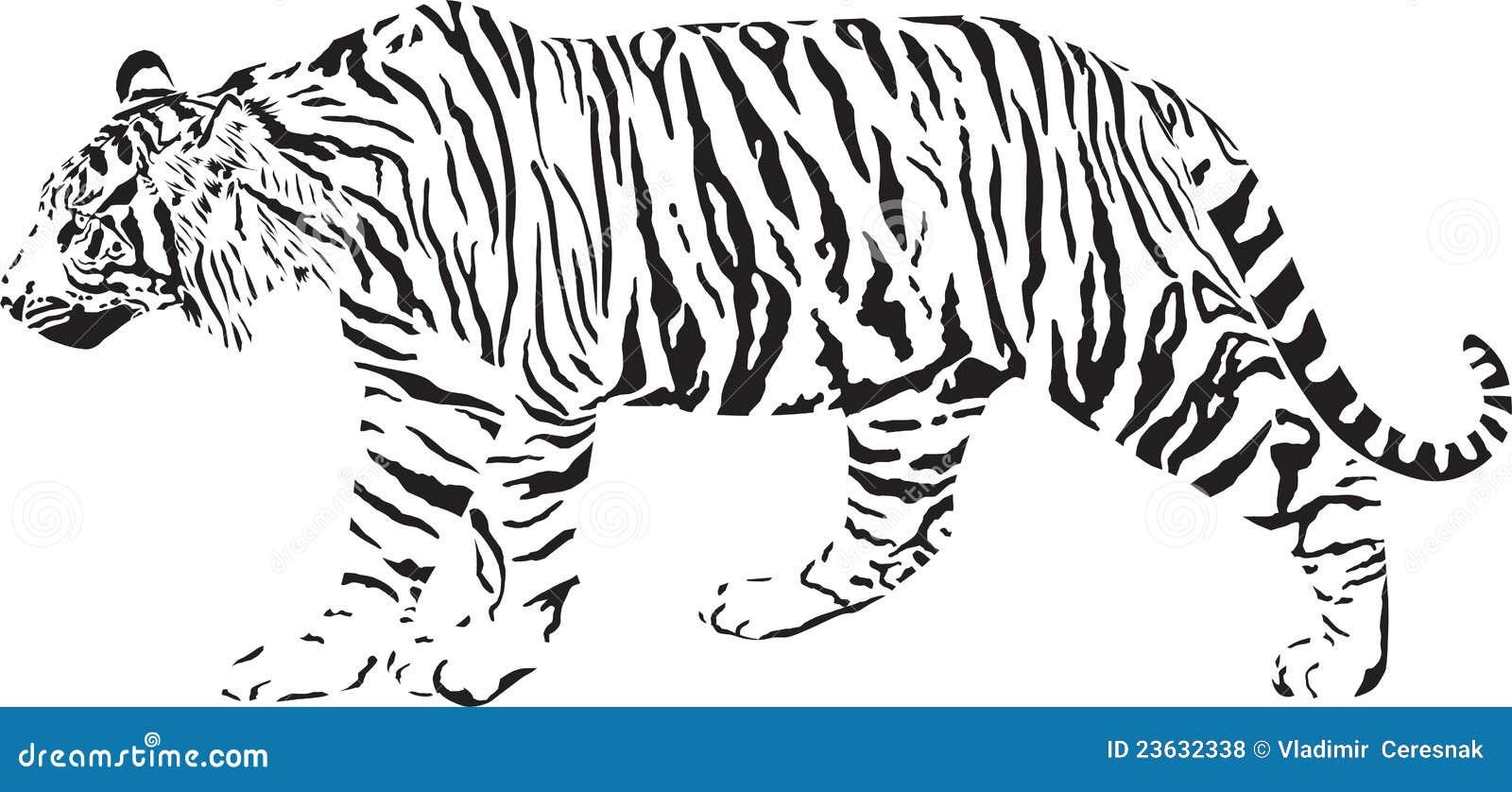 tigre noir et blanc photos libres de droits image 23632338. Black Bedroom Furniture Sets. Home Design Ideas