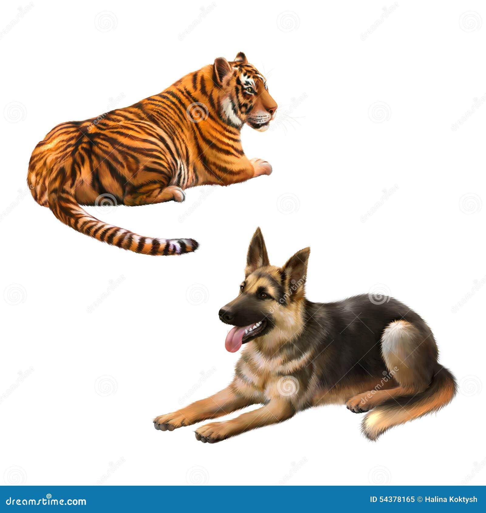 Tigre que mira perro ausente, alemán del shepard