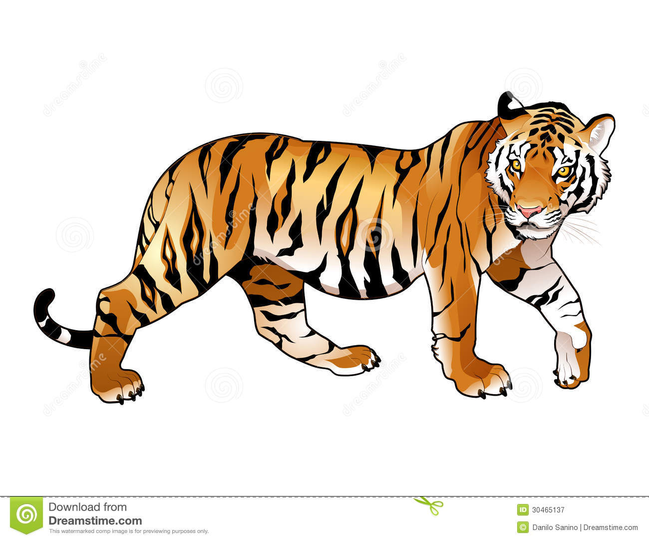 Tigre rouge.