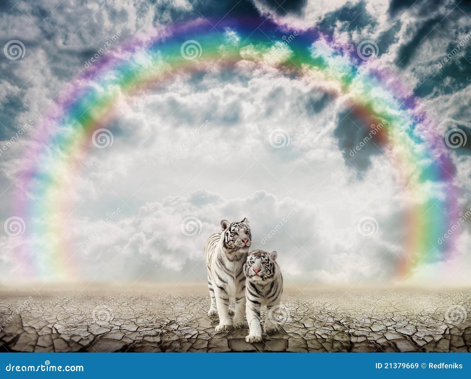 Tigres dans le désert