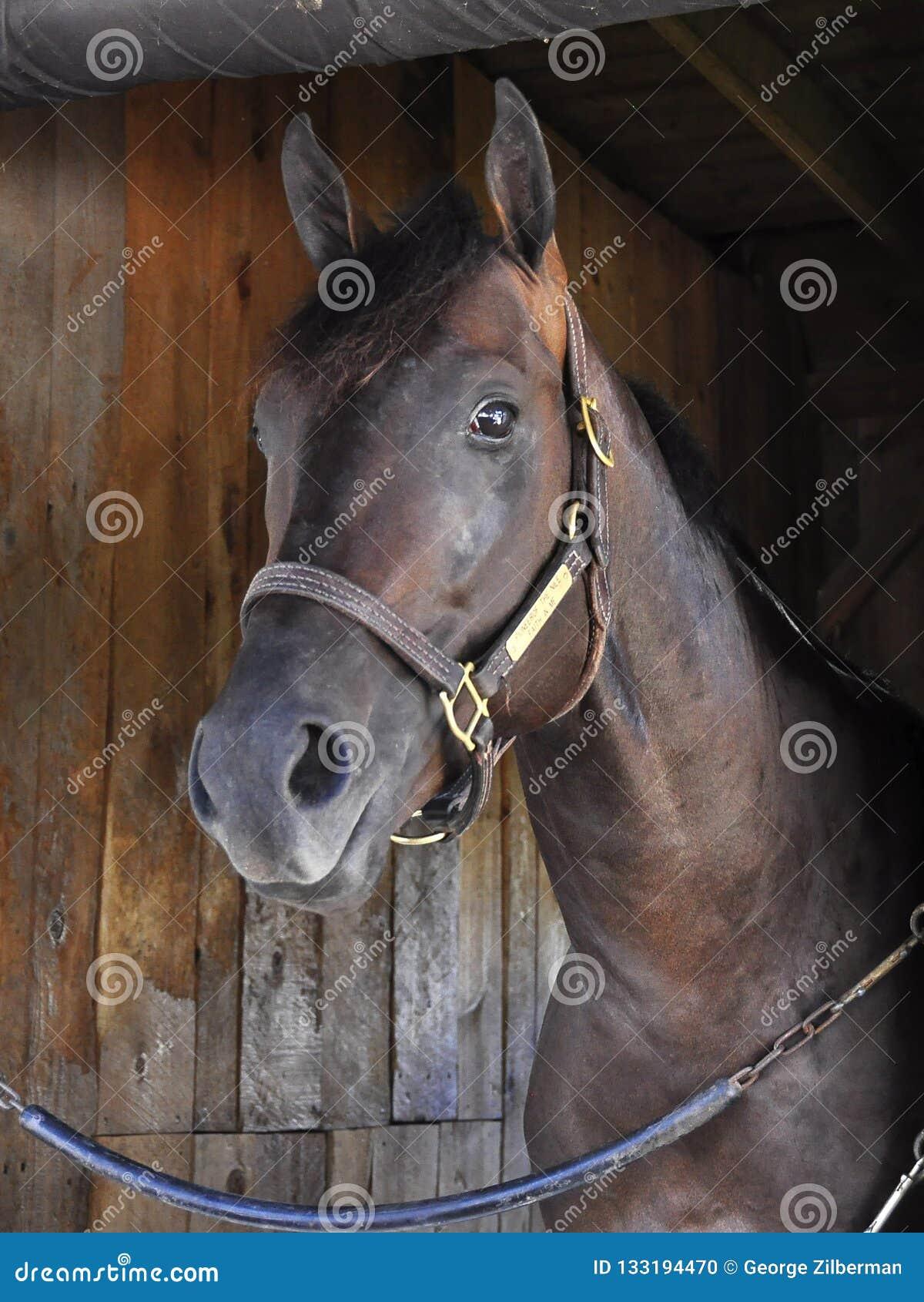 Tijdspanne - Paardtoevluchtsoord Saratoga
