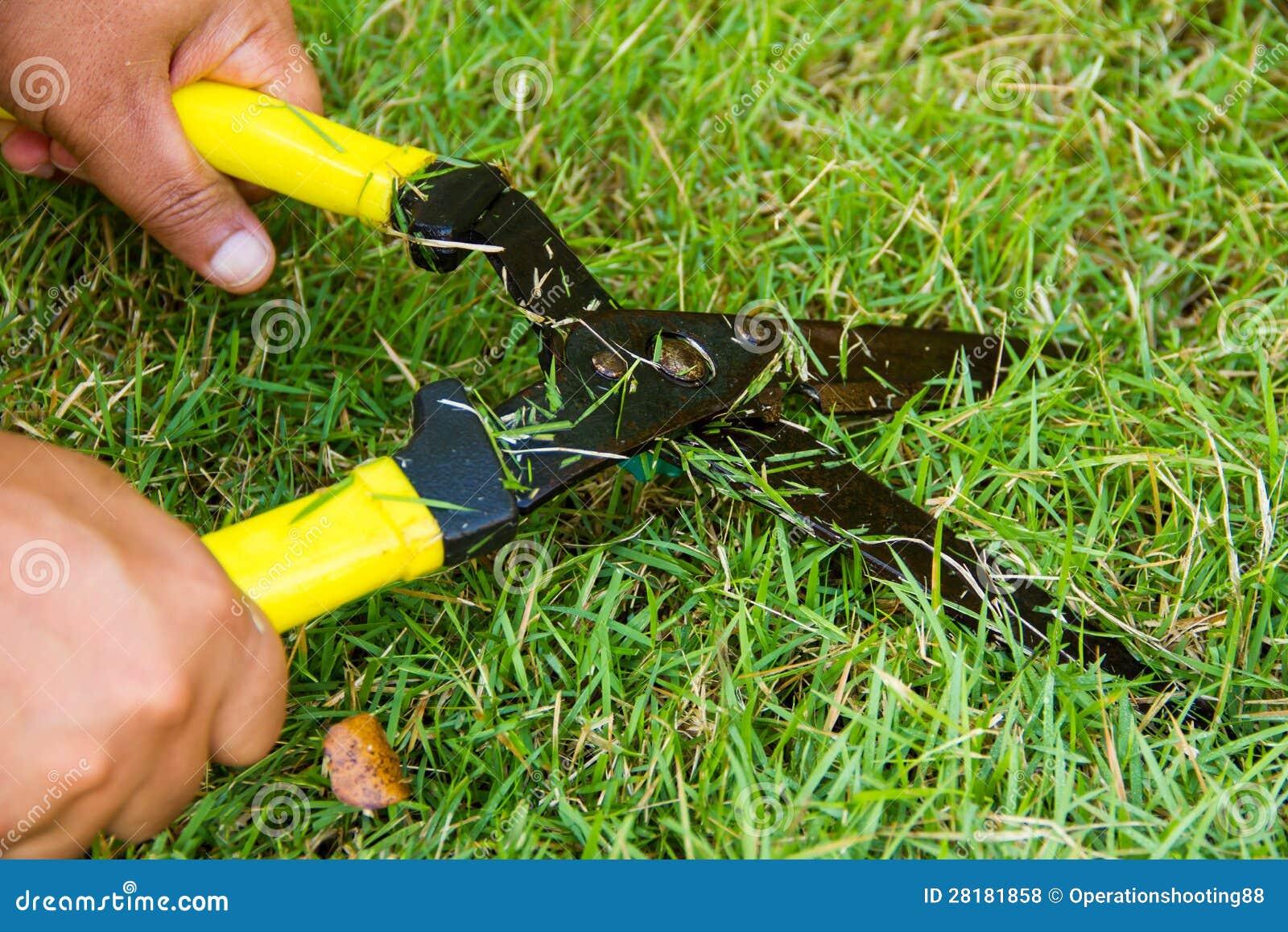 Tijeras para cortar la hierba foto de archivo imagen de - Cortar hierba alta ...