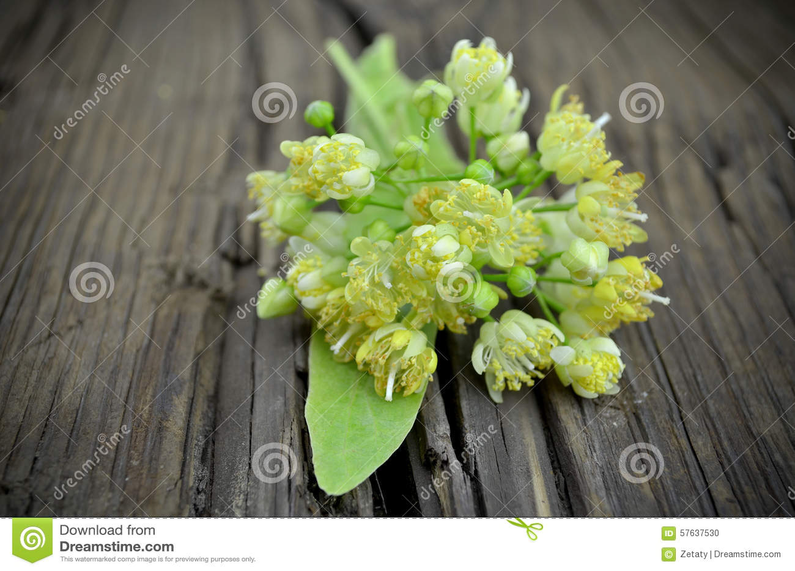 A Tilia Flowers Small Composition