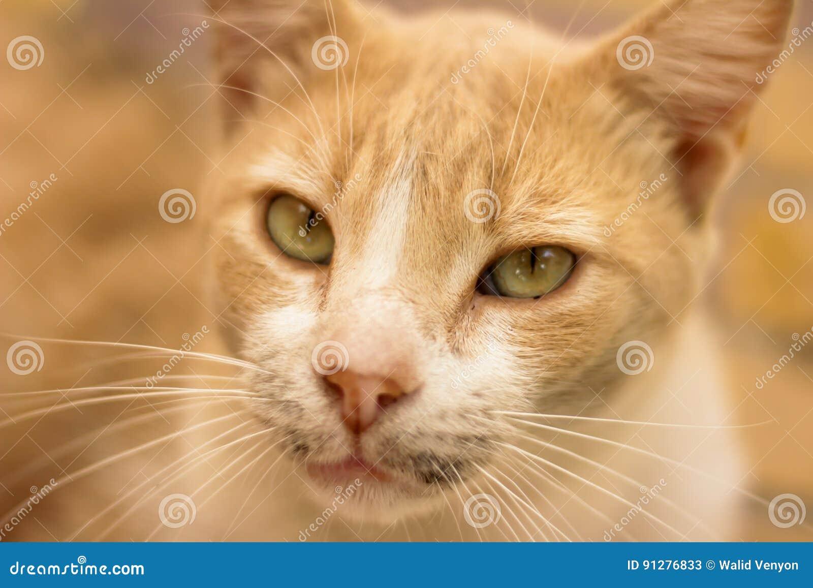 Tillfällig katt