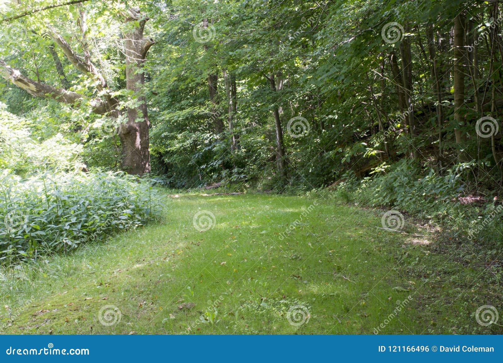 Tillträdesbana i skogen