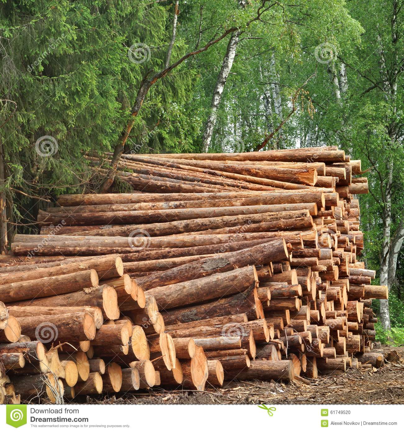 Timber harvesting for lumber industry or wooden housing