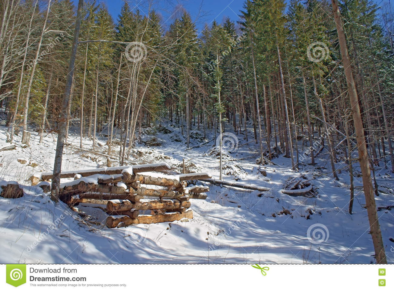 Timber structures for loading logs at slope in winter forest