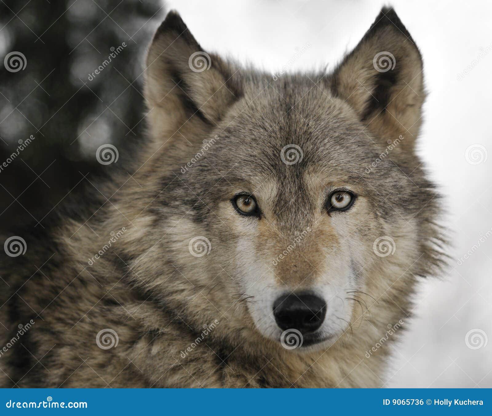 Holly Wolf photos