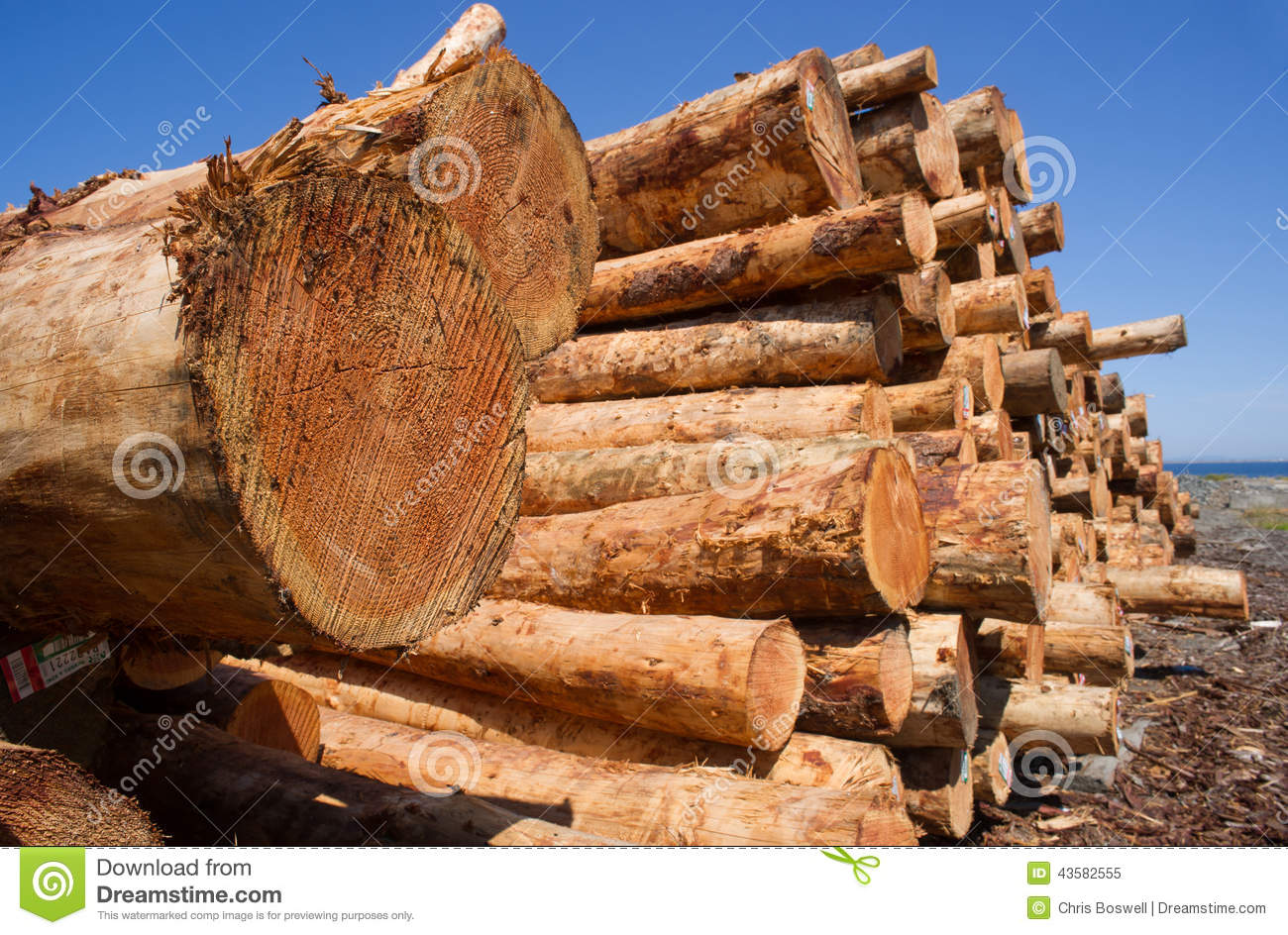 Timber wood logging industry lumber raw logs stacked stock