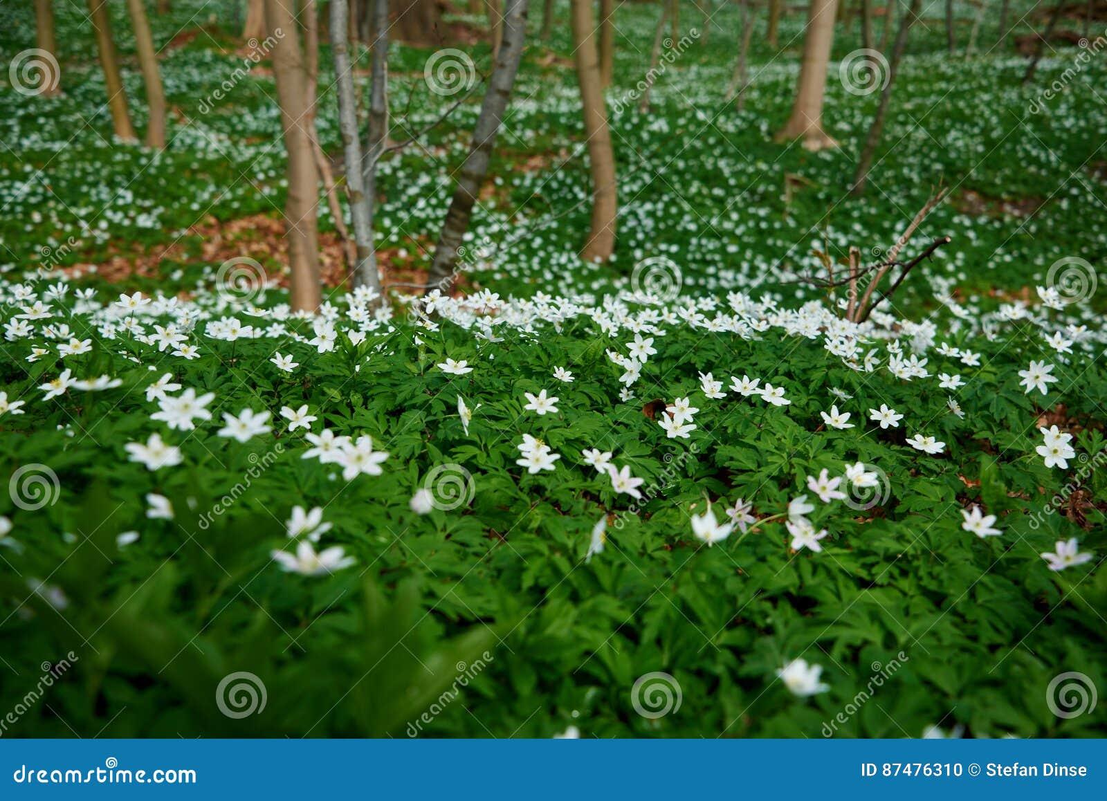 Timbleweed в лесе