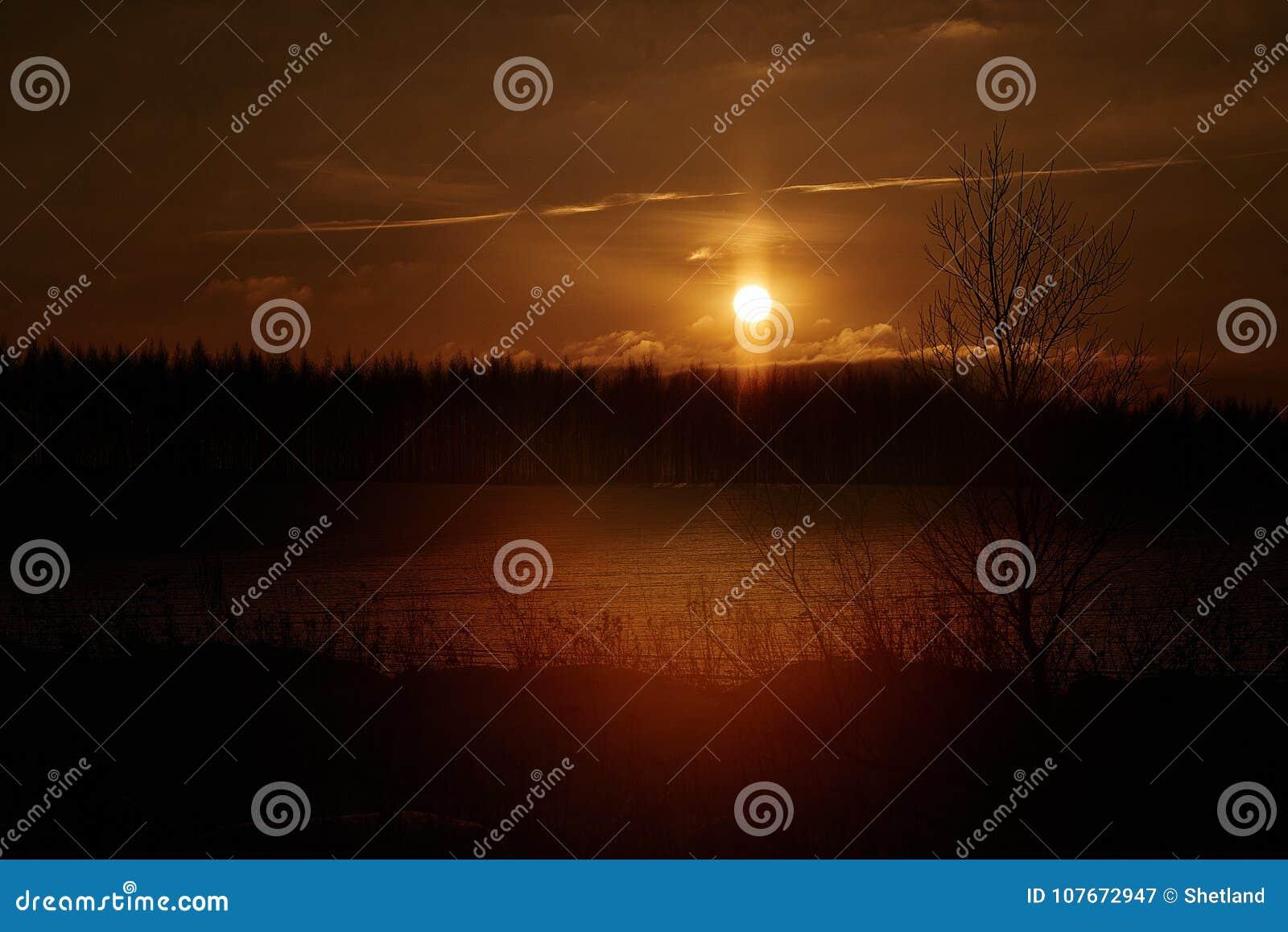 Fog, evening, dawn, tree, silhouette, river, night, light, dusk