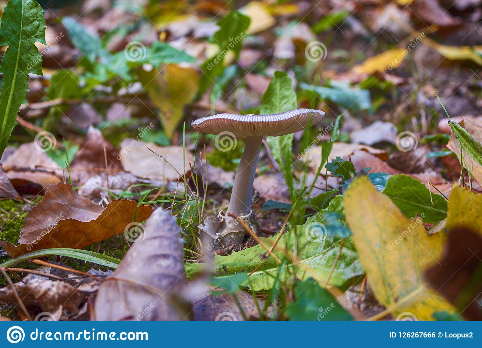 The Time Of The Mushrooms Is Here Stock Photo - Image of