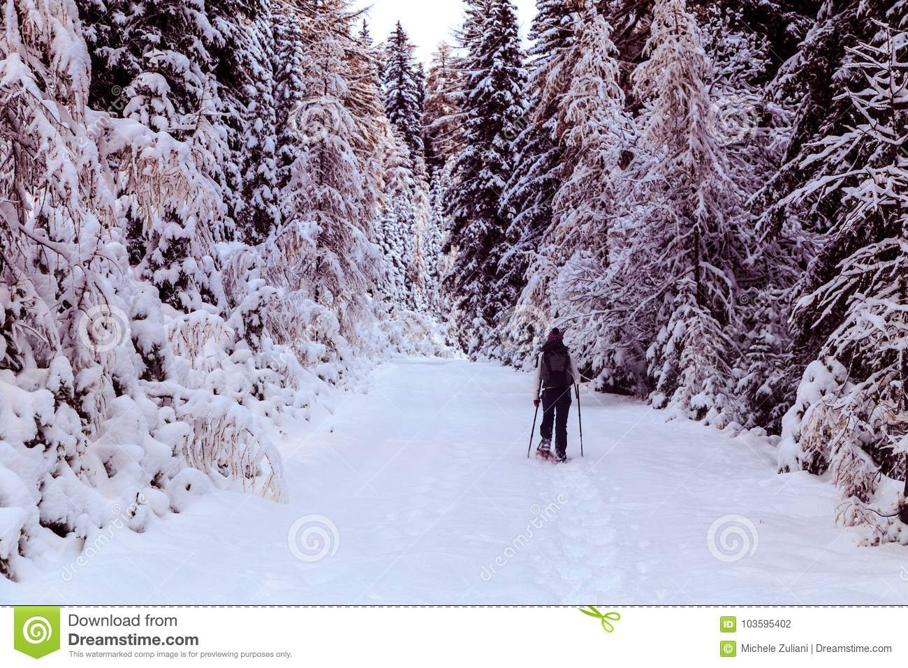 Girl Trekking With Snowshoes In The Wood Stock Photo