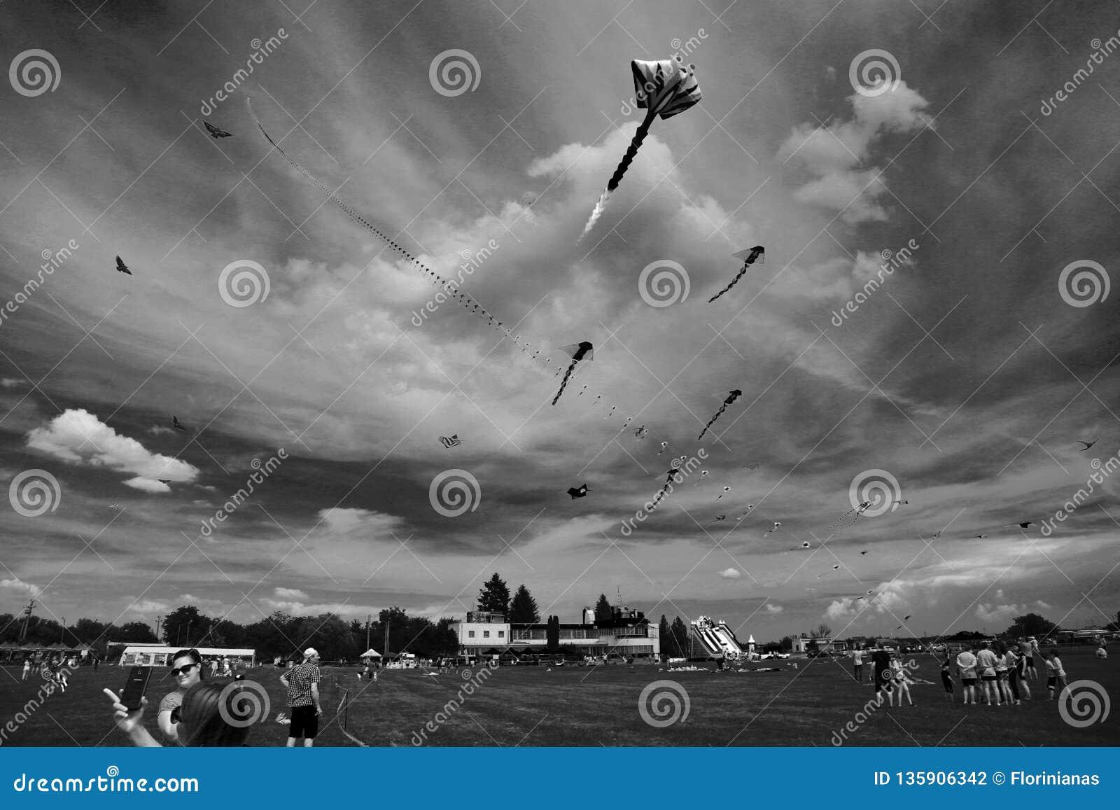 TIMISOARA, ROMÊNIA 06 01 20187 papagaios coloridos enchem o céu Tiro preto e branco