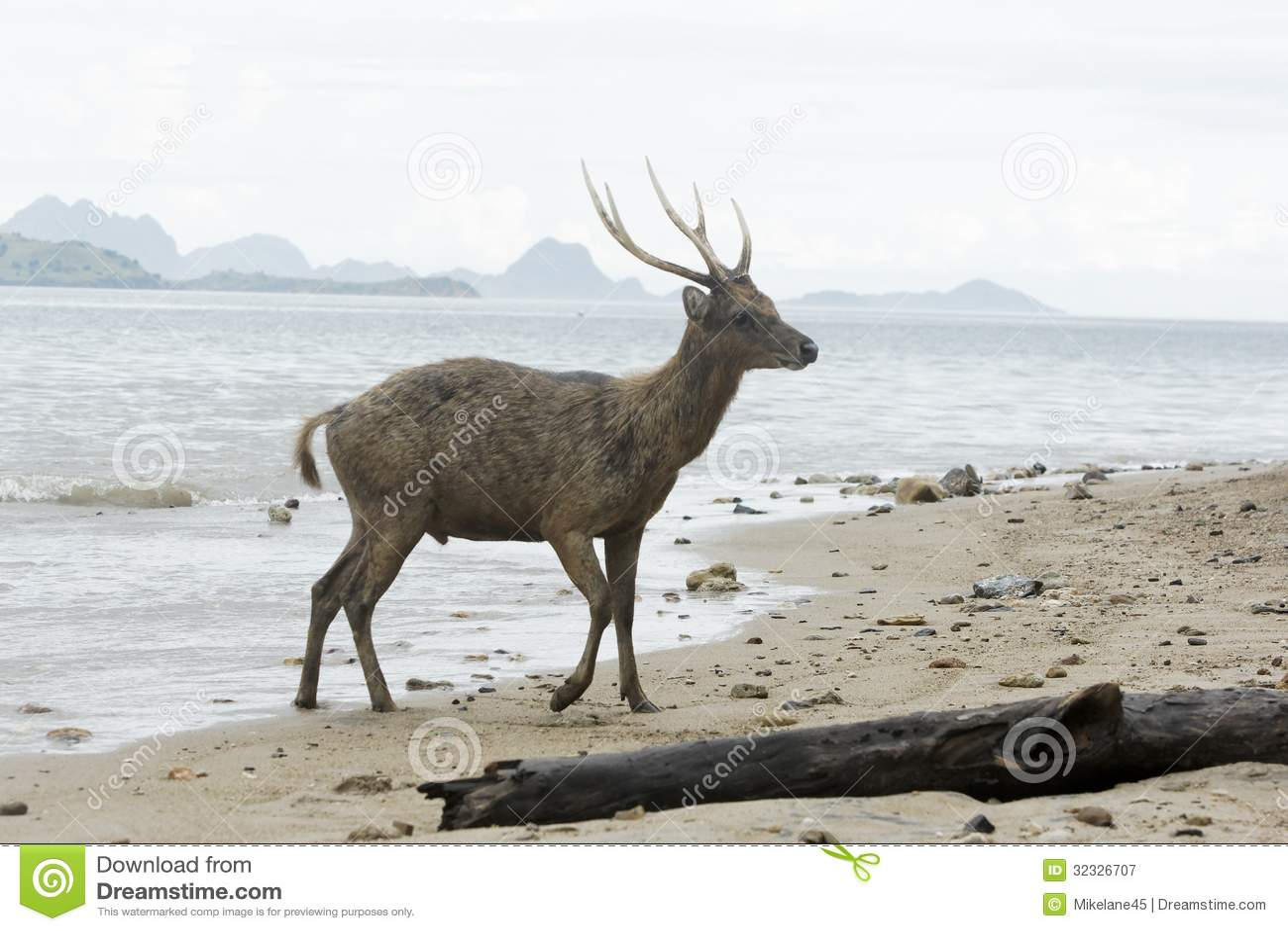 muslim single men in deer isle Deer isle – marjorie weith capen, 92, passed away peacefully nov 30, 2010, at blue hill memorial hospital she was born feb 8, 1918, in pittsburgh, to dr albert and margaret mccreery her.