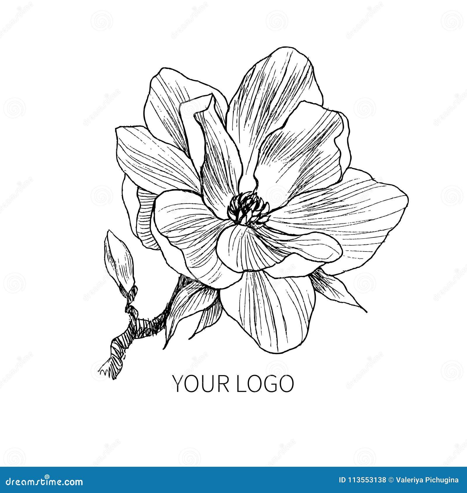 Tinte Bleistift Die Blätter Und Blumen Des Magnolienisolats Linie