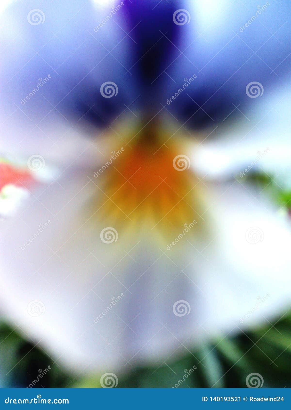 Abstract birdlike flower viola tricolor