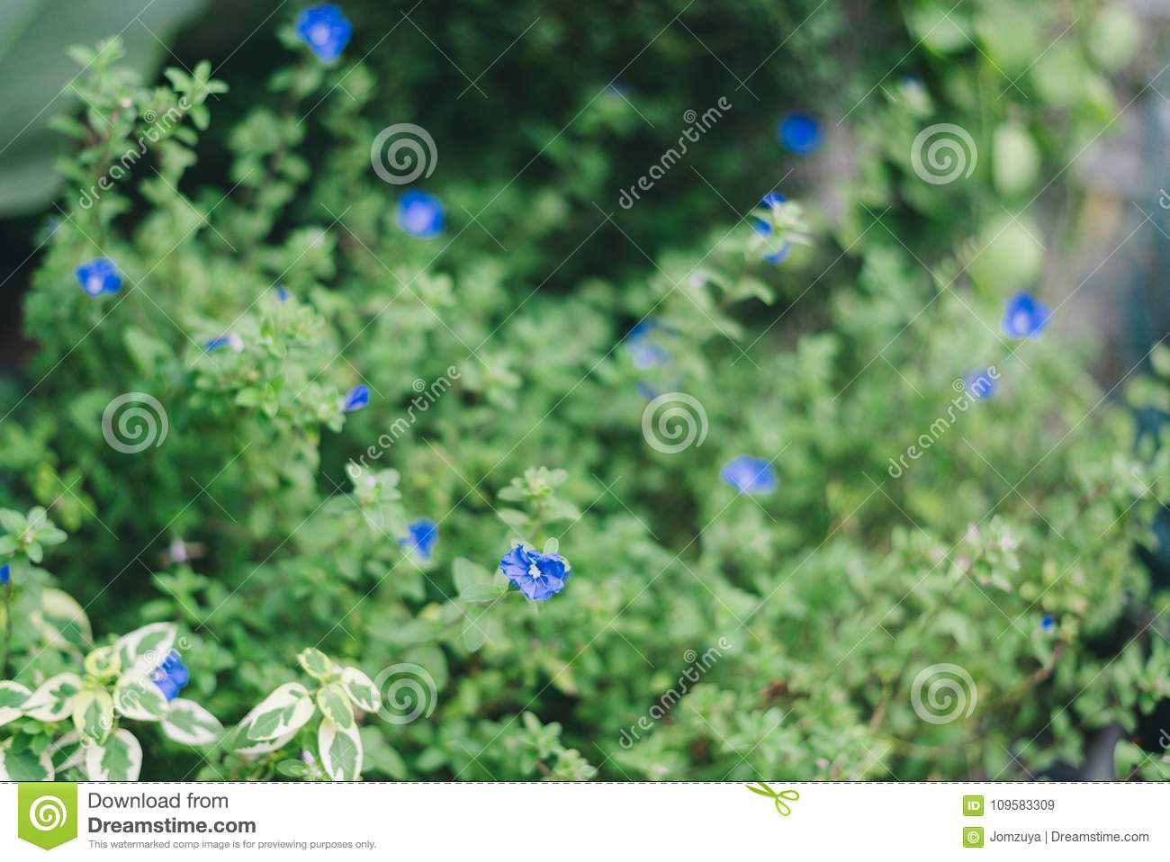 Tiny Blue Flowers With Fresh Green Leaves Stock Image Image Of