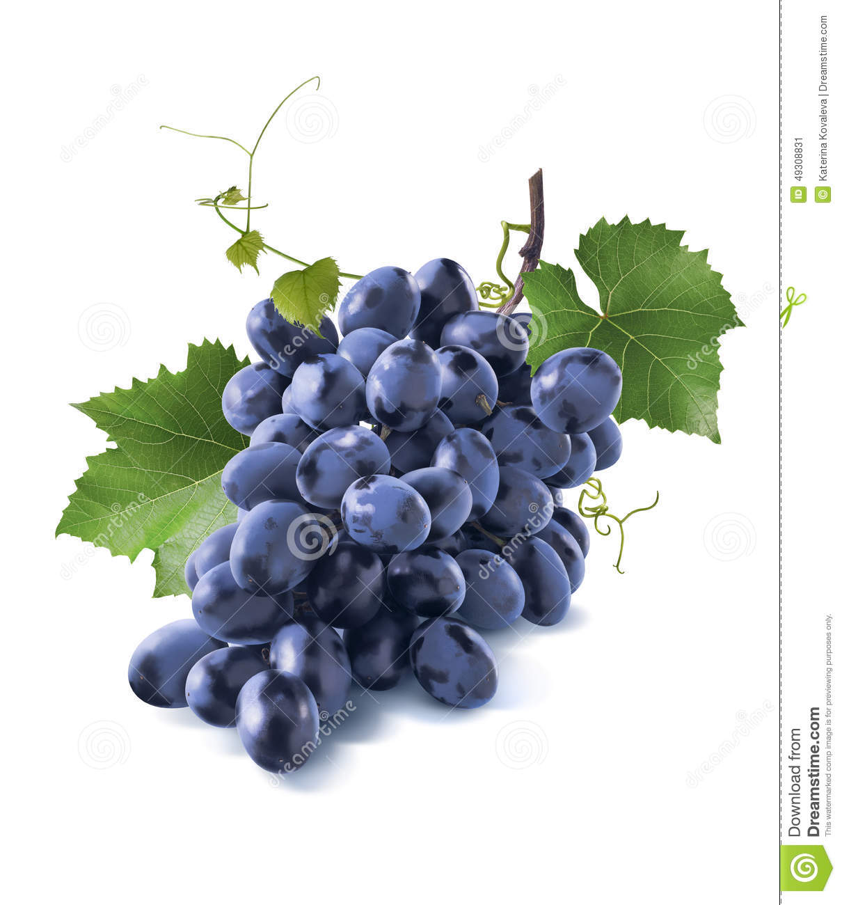 Tiny Dry Blue Grapes Bunch Leaves On White Stock Image ...
