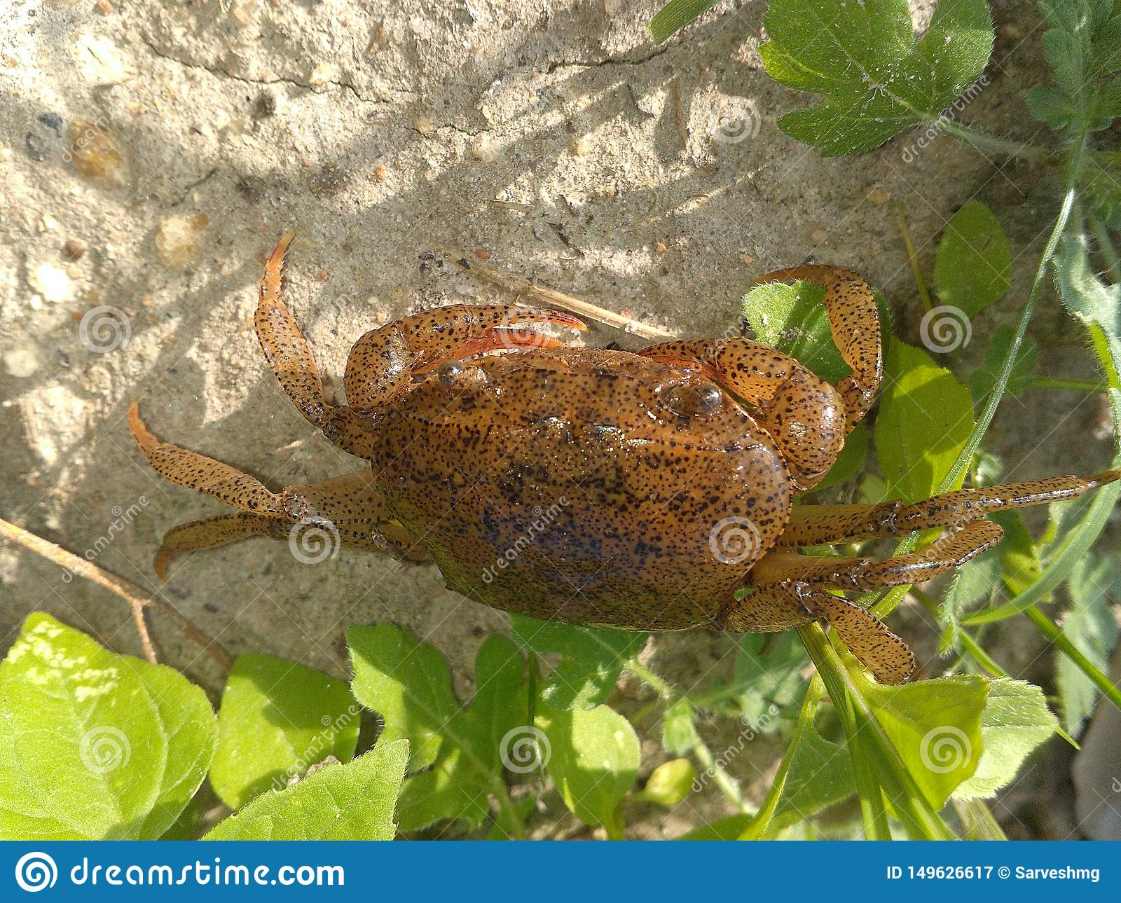 Tiny crab with a great body texture