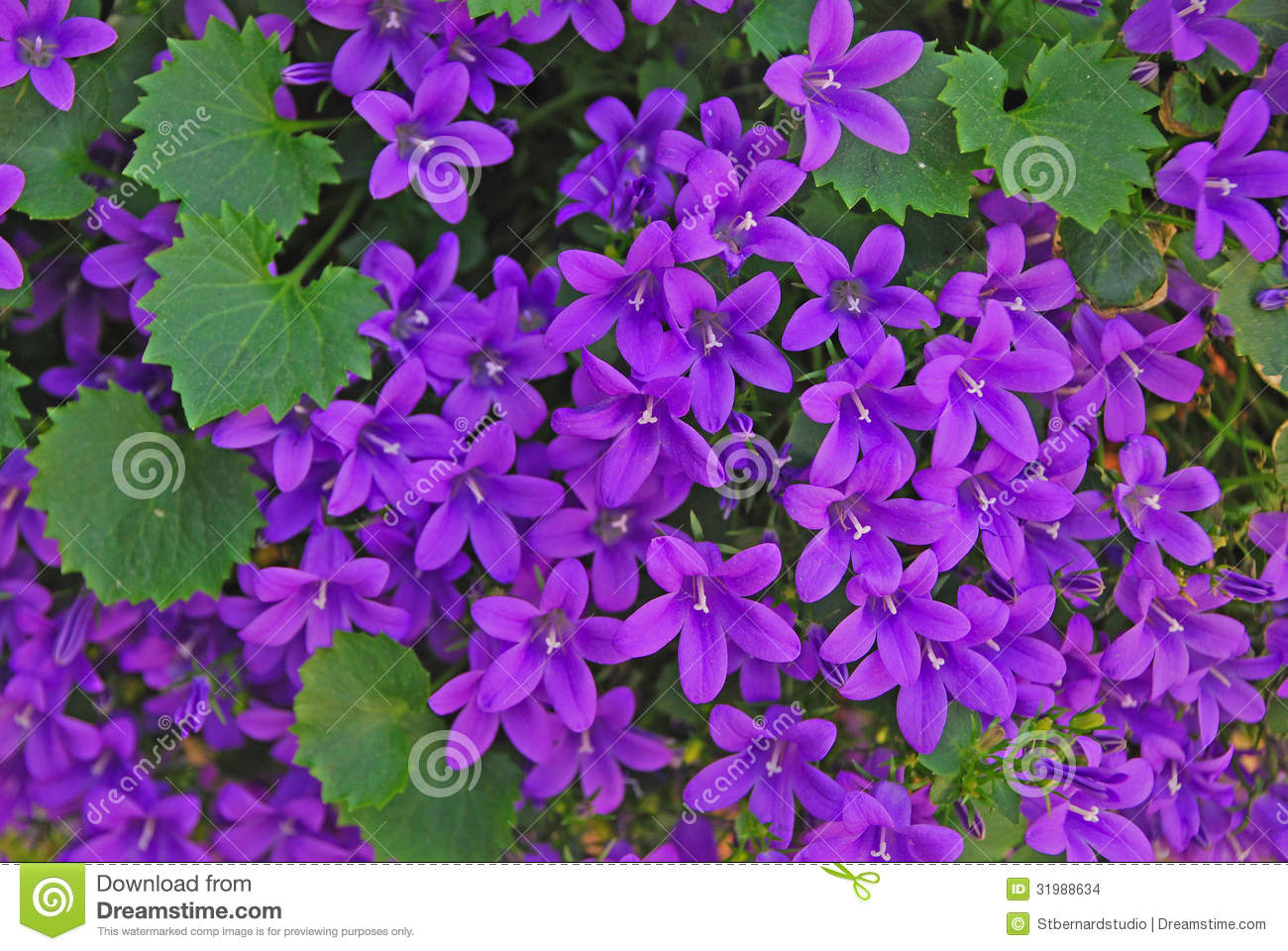 tiny little purple bell flowers stock images  image, Beautiful flower